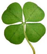 four-leaf-clover1