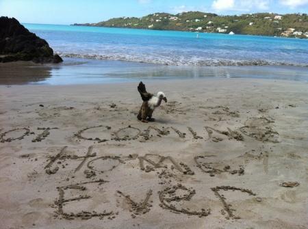 Buzz goes to Magans Bay, VI